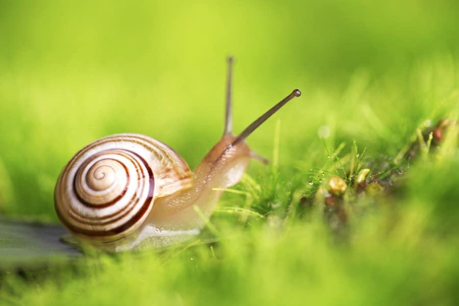 Dudutech - Pest - Snails
