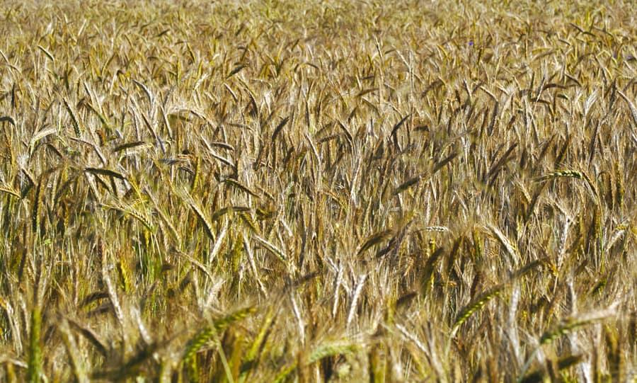 Dudutech - Solutions - Enhanced Crop Development