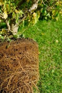 Dudutech - Solutions - Enhanced Root Development