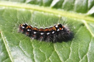 Dudutech - Solutions - Pest Control
