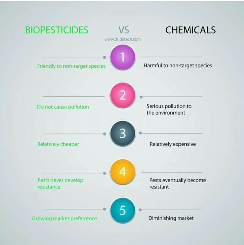 the use of pesticides and their harmful affects Chemical runoff from residential and farm products affects  pesticides and herbicides used on residential  each year to keep the bugs off their peapods.