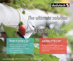 Dudutech - Follow the Ladybird